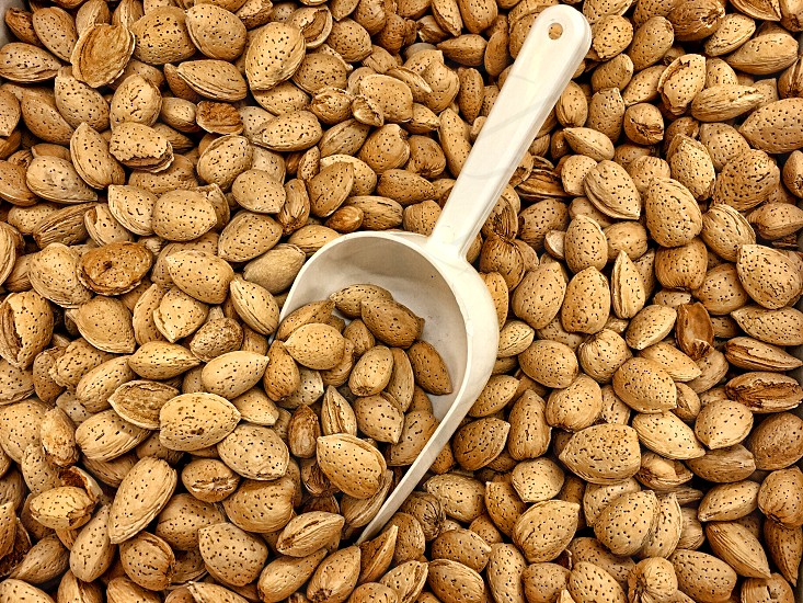 Scoop in a pile of  almond nuts still in their shell photo