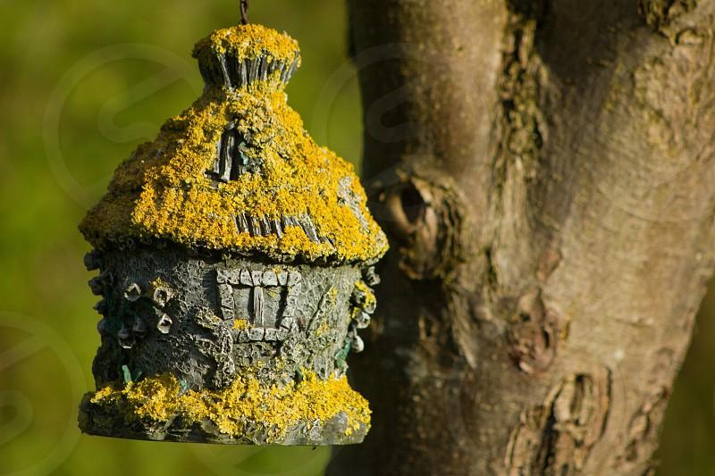 Birdhouse moss garden magical faeries photo
