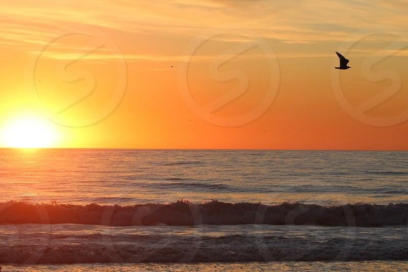 ocean view with bird flying photo