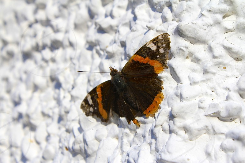 Butterfly sitting on a white wall photo