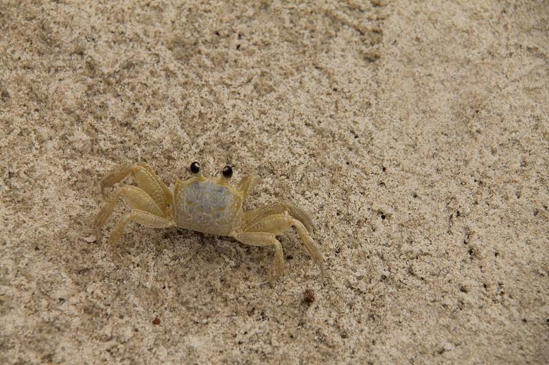white crab on sand photo