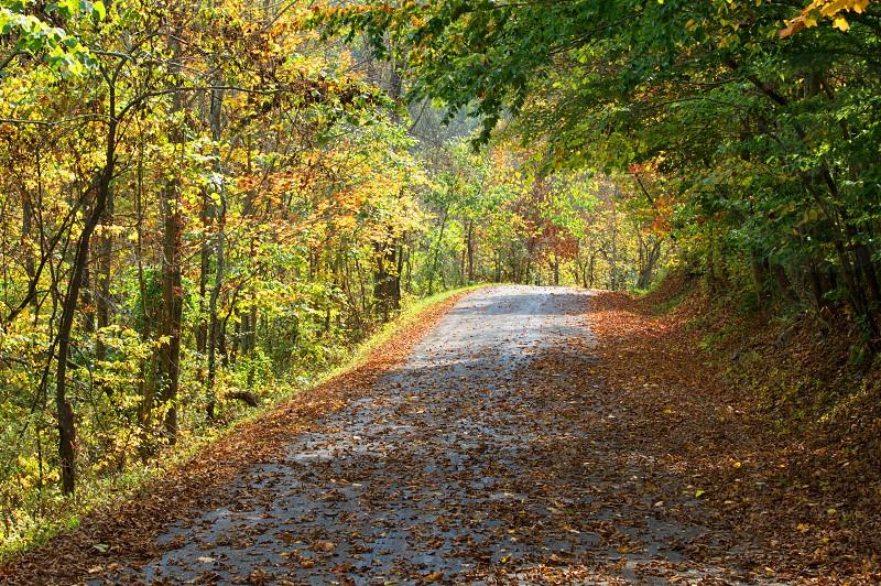 Lone Road photo