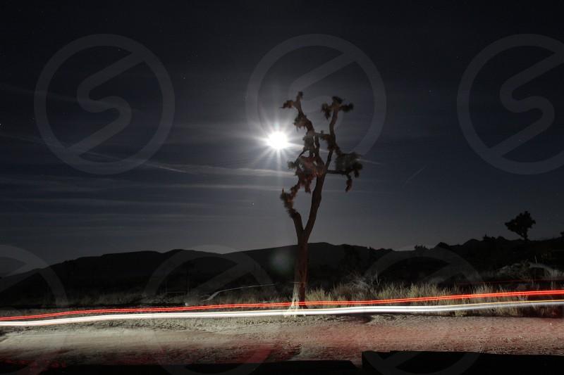 Moonlight  Joshua Tree photo