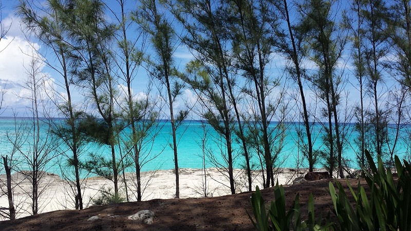 Caribbean Bahamas ocean trees background blue waters white sand photo