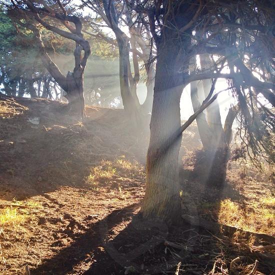 Sunlight through trees photo