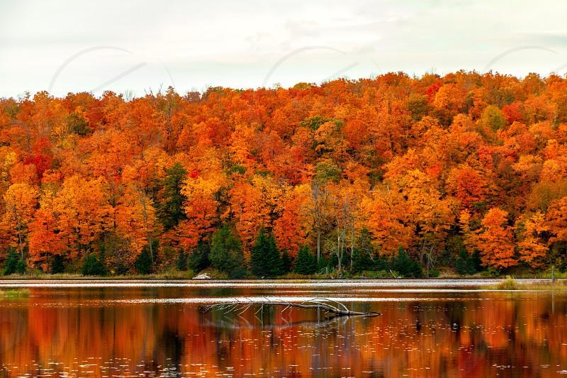 Fall autumn leaves lakeside lake canada national park colourful trees photo