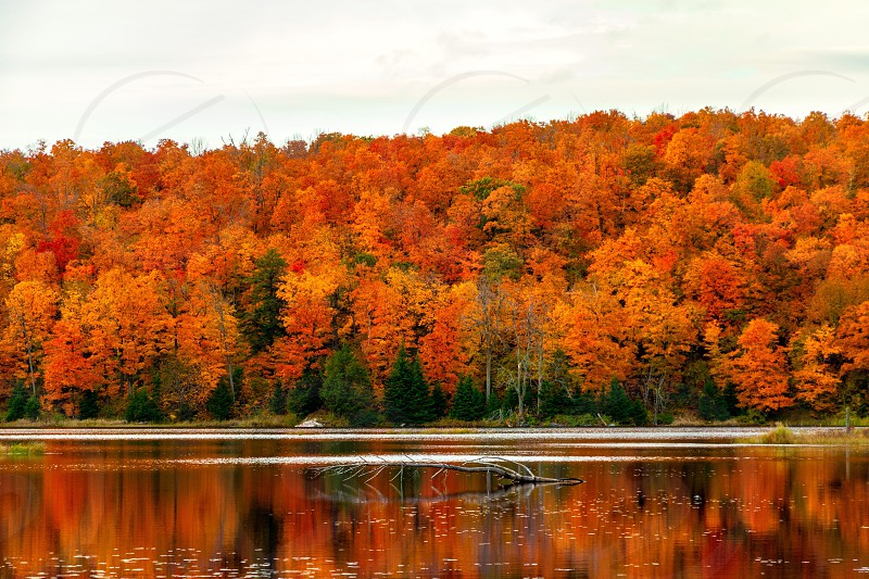 Fall Autumn Leaves Lakeside Lake Canada National Park Colourful Trees By Salman Ghaffarsamar Photo Stock Snapwire