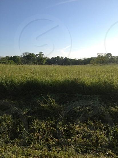 Field Outdoors Sky Grass photo