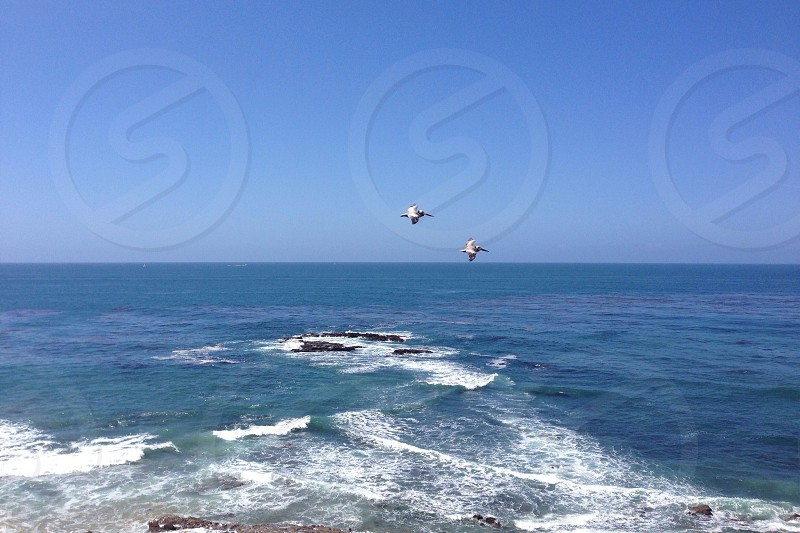 two flying birds on top of the sea surface photo