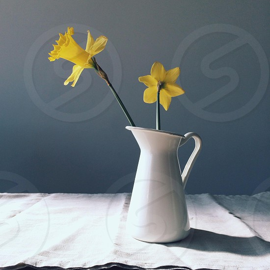 yellow flower on white ceramic pitcher photo