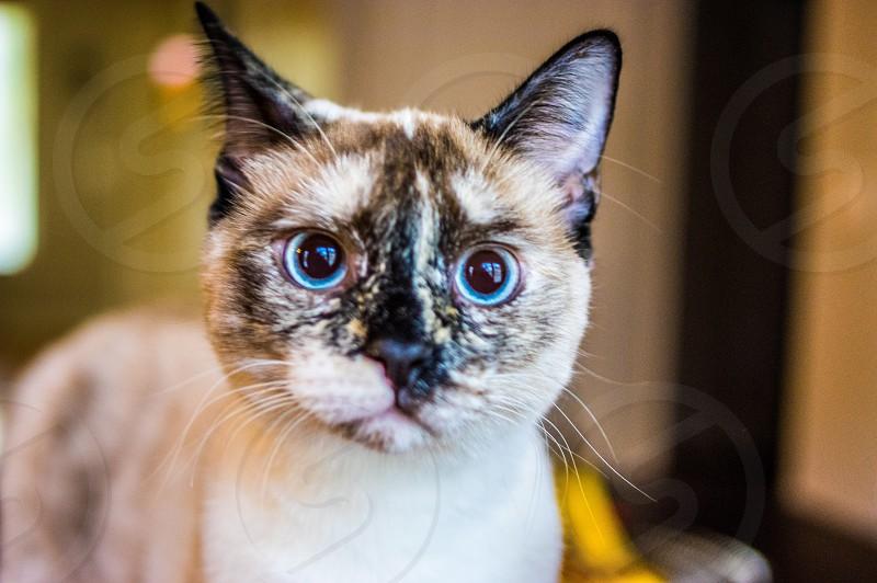 Cat eyes animal photo
