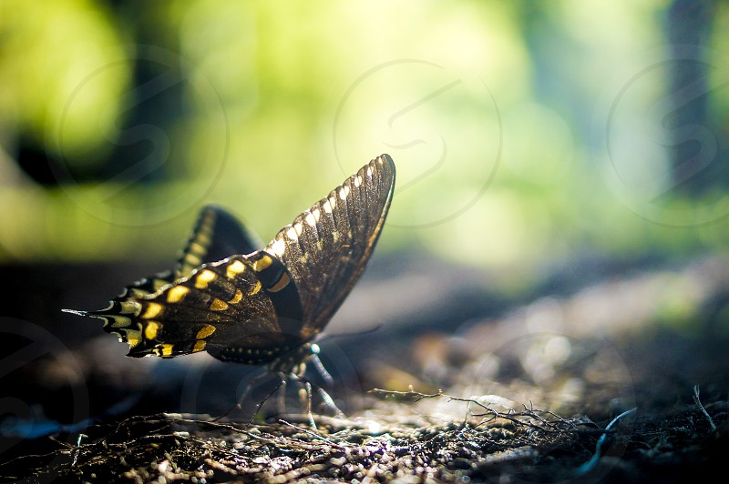 butterfly. inspiring meditative thoughtful thought-provoking nature light natural photo