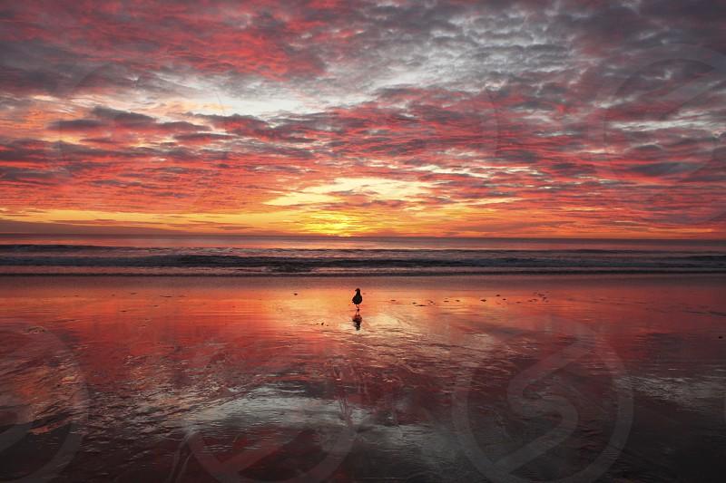 Sivan's Salisbury Sunrise 1 photo