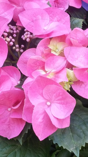 Flowers at Rockefeller Center NYC. #flowers #pink #green #yellow #petals photo