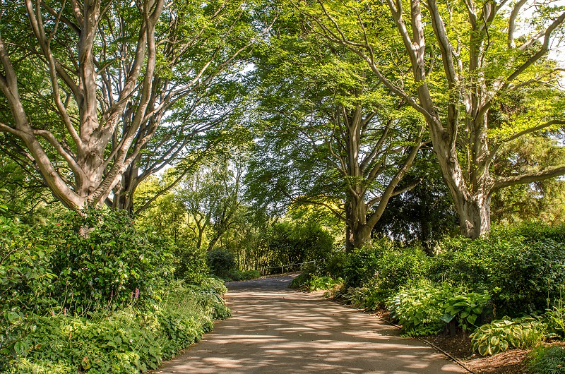 brown pathway in green trees photo