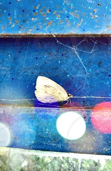 Butterfly among the cobwebs. photo