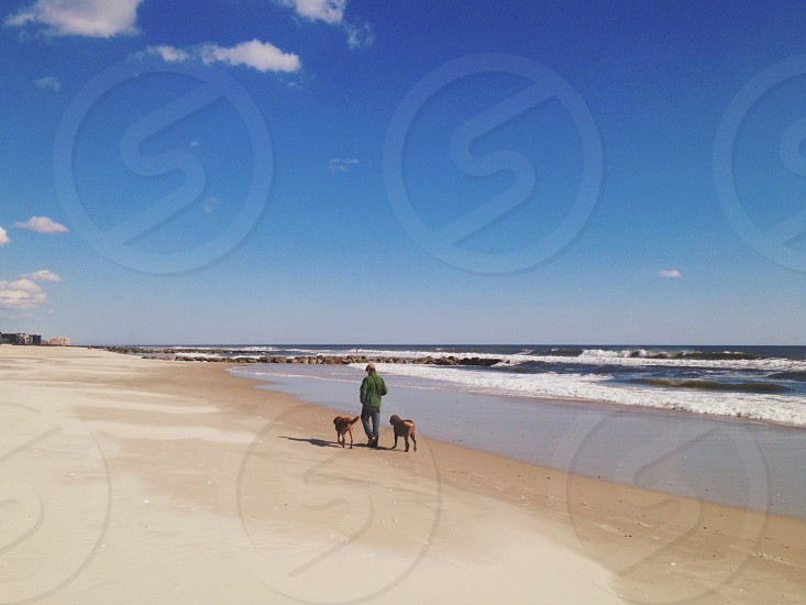person in green jacket walks with two brown dog near seashore during daytime photo