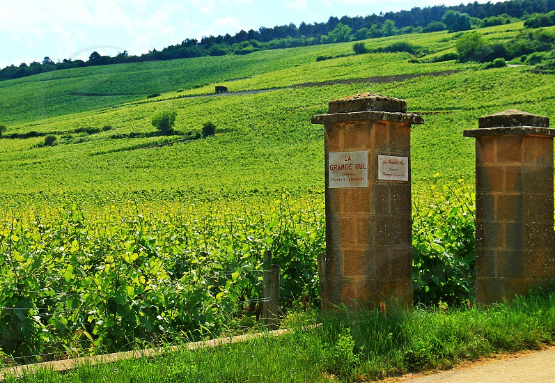 Driving through the vineyards in Burgundy France photo