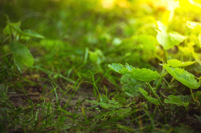Close up on forest ground flora with green plants and grass. photo