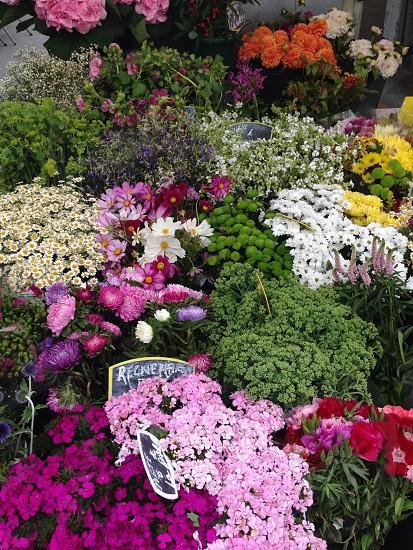 Flowers in a Parisian market photo