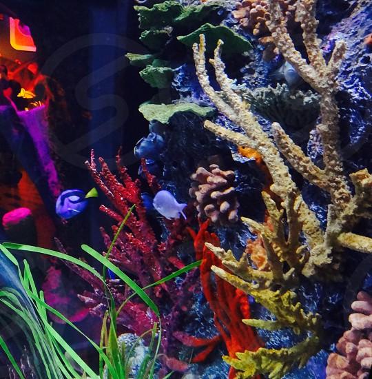 Color colorful water fish neon lit pretty bright life sea life  photo