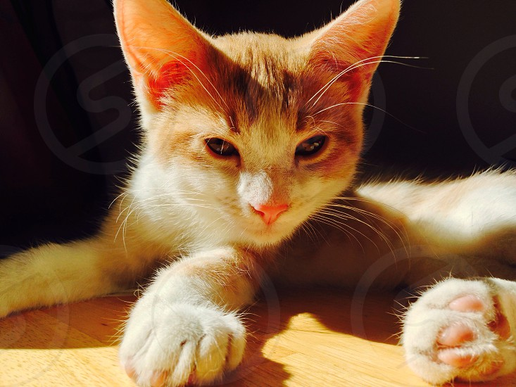 Kitten in the sunlight photo