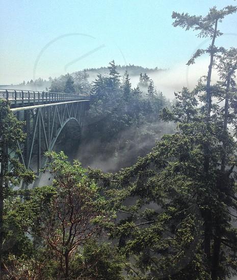 trees near grey metal bridge photo