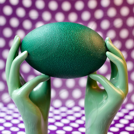 Ostrich egg photo