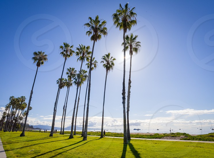 tall palm trees in green grass under clear blue sky during daytime photo