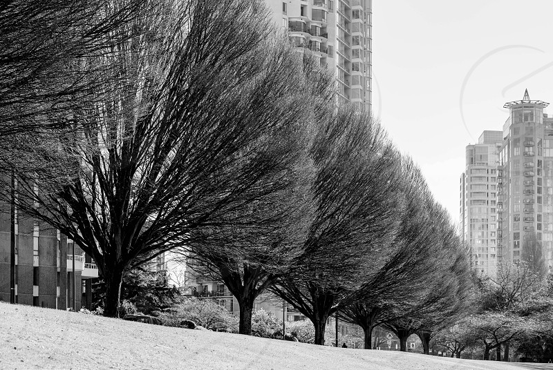trees and buildings grayscale photography photo