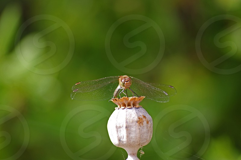 dragon fly single focus photography photo