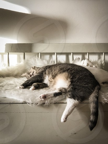 Relaxed relaxation  cat sofa furniture  laying down  sleepy sleeping pet photo