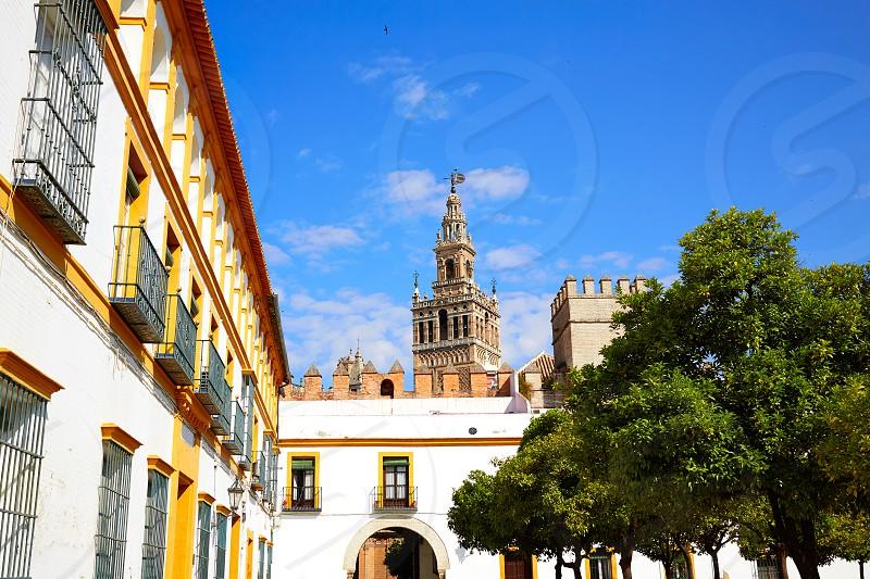 Seville Giralda tower of Sevilla from Alcazar Andalusia Spain photo