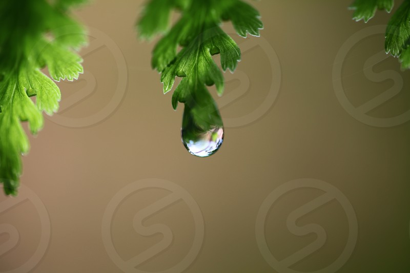 white drop from green leaf in macro photography photo
