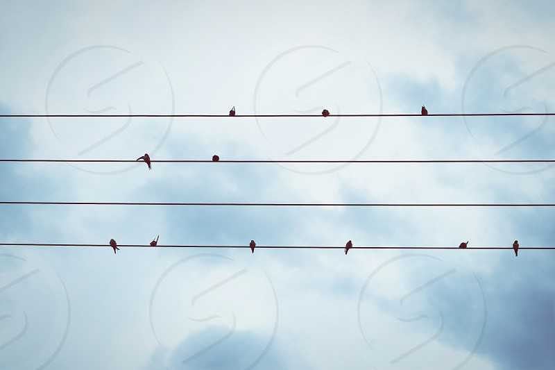 swallows on a cable. looks like music notes. photo