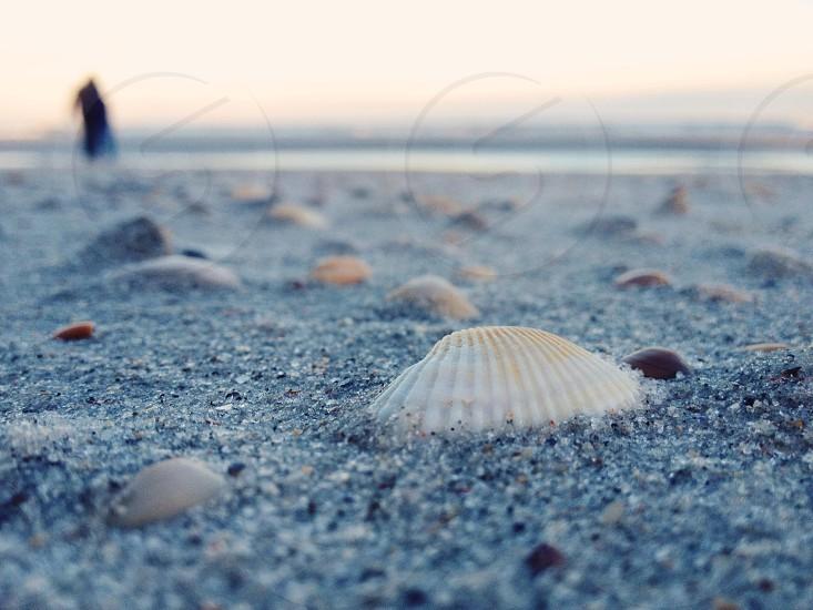 Jax beach. photo