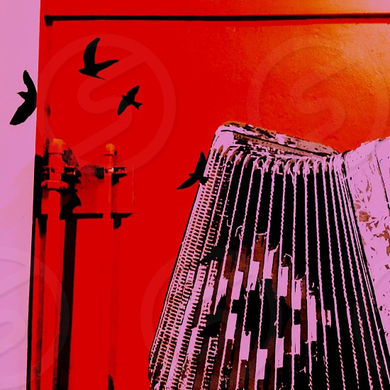 red black bird artwork photo