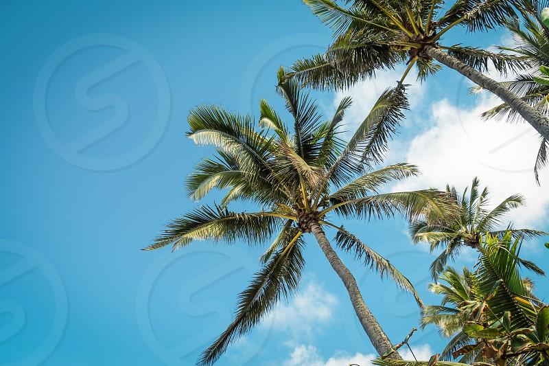 Palm tree and blue sky photo