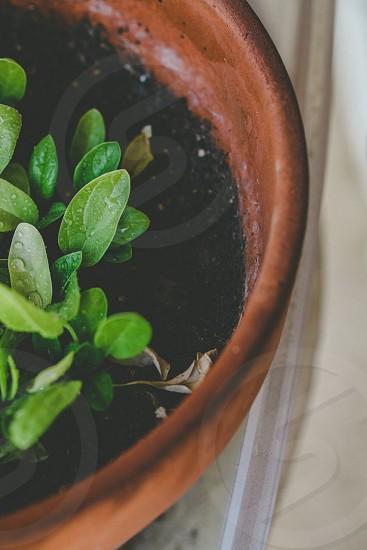 Planting on a balcony photo