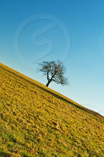 bald tree in oblique angle with blue sky photo