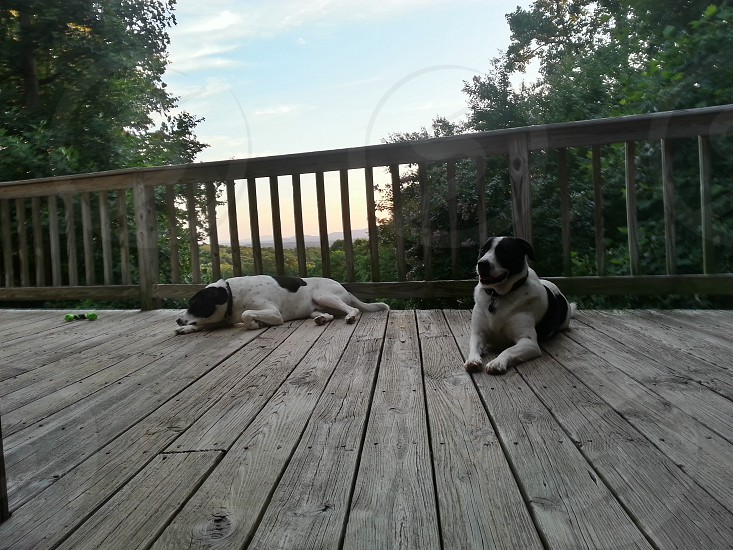 Two dogs on the porch at sunset. photo