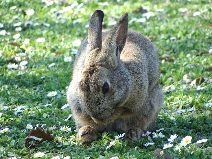 grey rabbit on grass photo