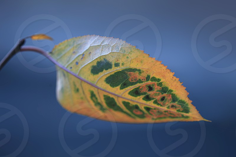 colorful autumn leaves changing color photo