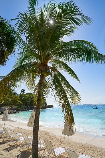 Akumal coconut palm trees beach in Riviera Maya of Mayan Mexico photo