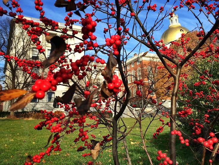 Capitol building.  photo
