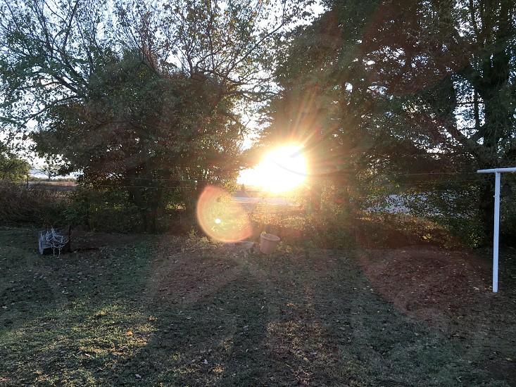 Sun Trees Nature Sunset photo