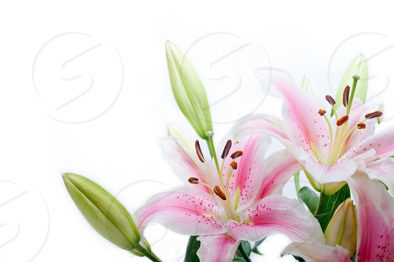 pink lily flower bouquet photo