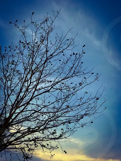 tree branch fall falls autumn leafless season dry sky cloud blue background dead death sad sorrow solitude calm silence lifeless still empty end fallen  hopeless desperate nature weather photo