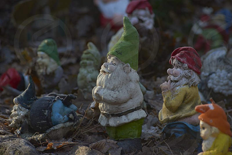 Close up of a family of garden gnomes in eraly morning light photo