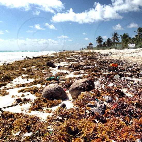 2 brown coconut  fruit  on seashore  photo